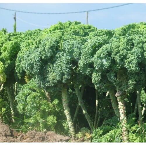 קייל - מזון אורגני וייעוץ לתזונה נכונה