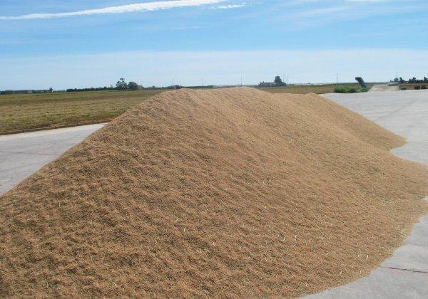 קציר אורז בדלתא של הנהר איבר