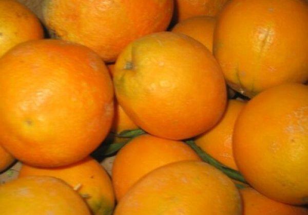 עושים קצת סדר בתפוזים